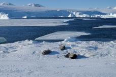 Sea ice breaking up. Credit: Dan Beeden (BAS)